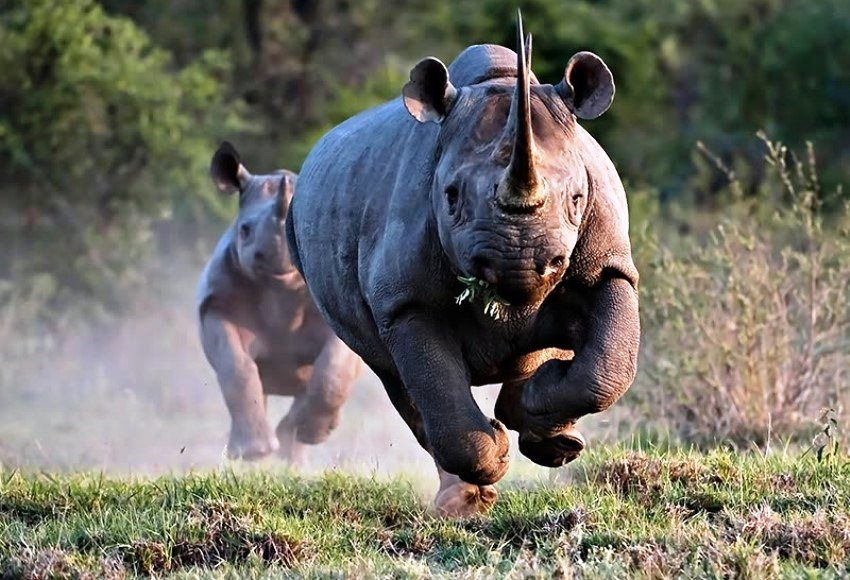 Rhinoceros Most Dangerous Animals